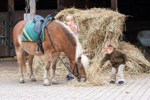 Kind gibt Pferd Stroh